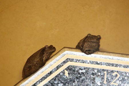 Frogs sitting on a frame