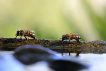 Bees drinking water from a fountain Banco de Imagens