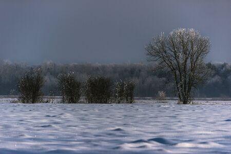 Trees after freezing Stok Fotoğraf