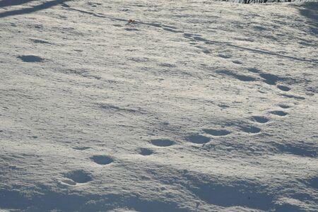 Beautiful snow landscape in Hokkaido