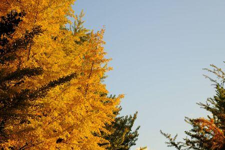 Tree-lined Reklamní fotografie