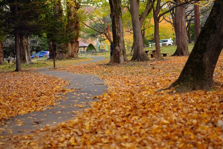 The small diameter of the autumn leaves