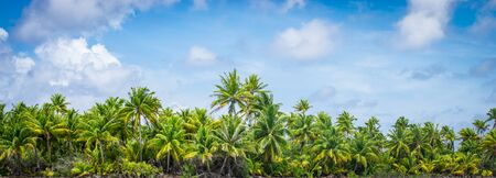 Panoramic tropical palm tree landscape.