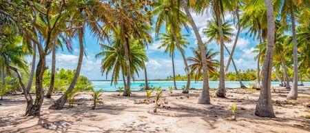 Coconut palm trees on the beach of Fakarava.