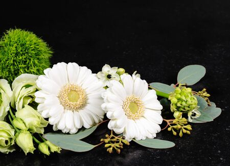 White gerbera daisies and fresh cut flowers on black background. Фото со стока