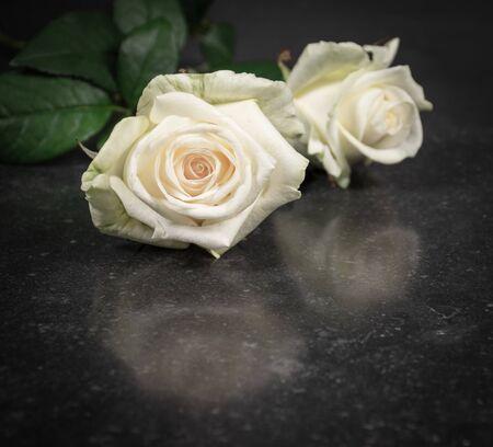 White fresh roses isolated on black stone texture background.