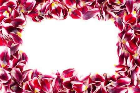 Romantic flower frame. Border of red tulip petals isolated on a white background. Фото со стока