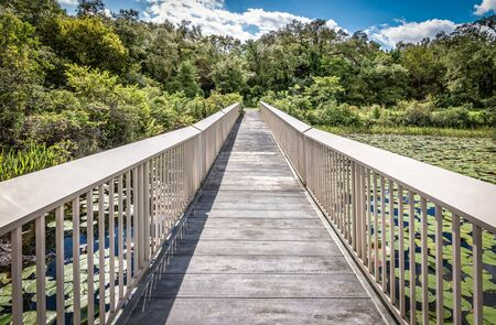 Wooden boardwalk at the swamp of the Everglades National Park, Florida, USA.