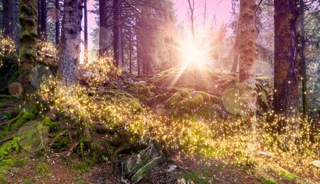 Magical and enchanted forest landscape with shimmering lights.