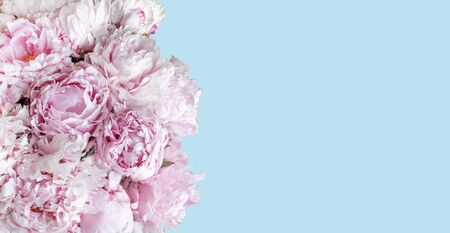 Soft pink peony flower bouquet on blue background.