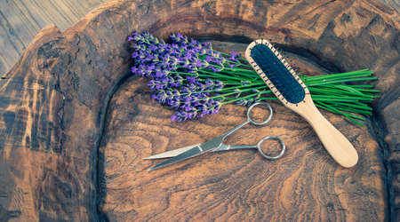 Hair stylist concept with lavender flowers. Фото со стока