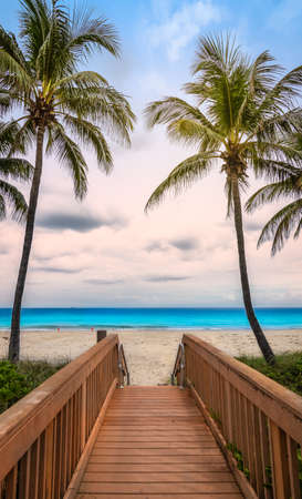 Wooden boardwalk access to Hollywood beach with swaying coconut palm trees in Florida, USA.