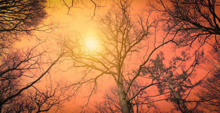 Low perspective of tall bare trees against a fiery orange background with hazy sun through the trees.
