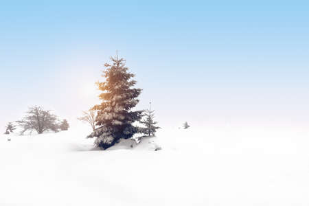 Fir tree in the snow. Cold winter landscape background. Фото со стока