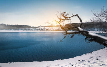 Winter landscape with bare tree trunk at lake Butgenbach, Ardennes, Belgium. Фото со стока