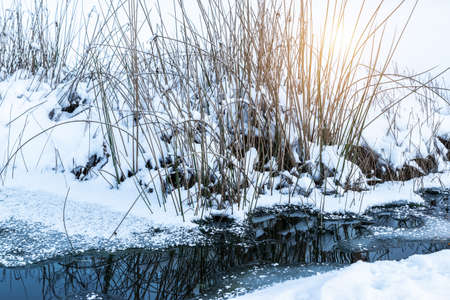 A frozen garden pond with dry grasses and melting ice. Winter detail. Фото со стока