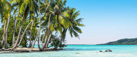 Beautiful coconut palm trees swaying on the beach of tropical atoll of the Society Islands in French Polynesia.