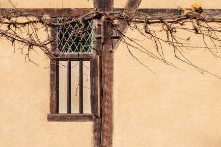 Dry grape vine at old wooden window of rustic clay wall. Фото со стока
