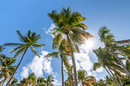 Tropical palm trees against blue sky.