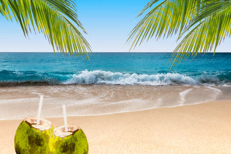 Fresh coconut drinks on tropical beach with swaying palm trees.