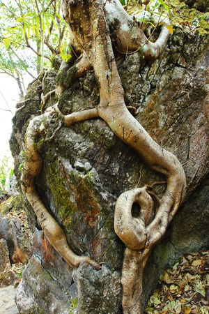 hardwoods: Rocky outcrop with bare roots showing on a large hardwoods tree