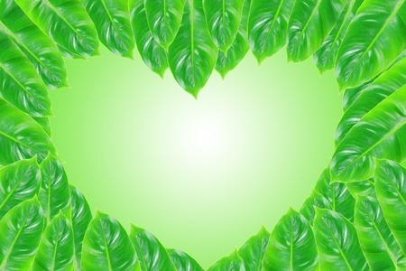 green leaves frame shape heart Stock Photo - 12880599