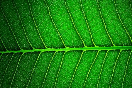 Green leaf background texture photo