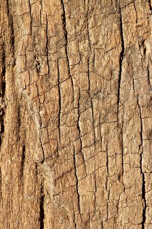 Old wood texture , closes – up   photo