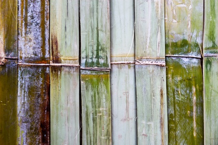 bamboo wall texture , closes � up photo