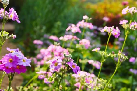 Pink flower background   photo