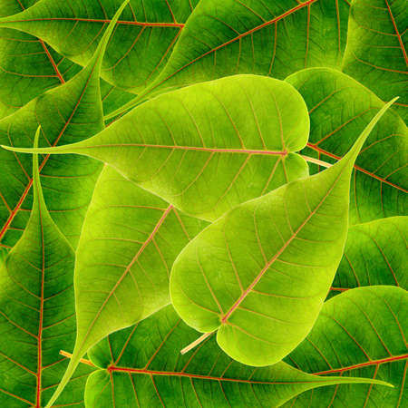green leaves background Stock Photo - 13105077