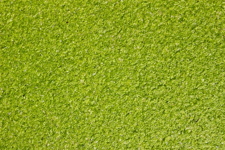 水雑草、蚊のシダのパターン