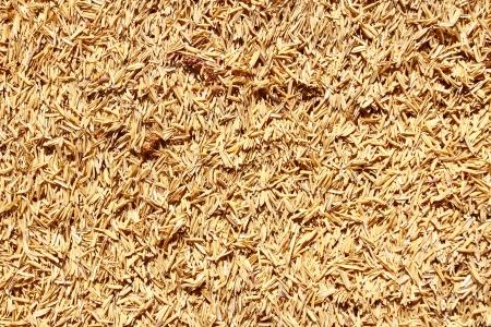 husk: arroz c�scara Foto de archivo