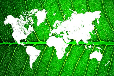 world map in a leaf Stock Photo - 14608035