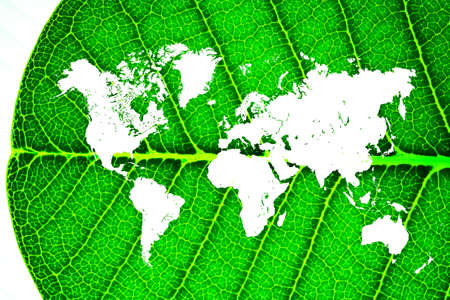 world map in a leaf Stock Photo - 14598995