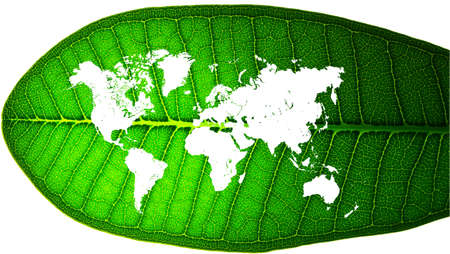 world map in a leaf Stock Photo - 14598997