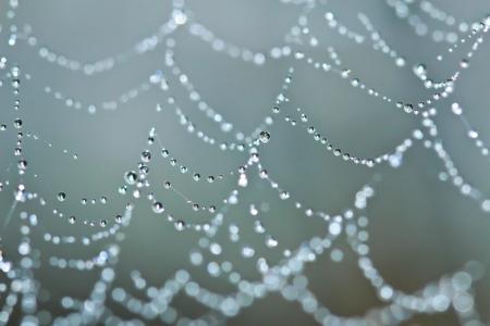 輝く露の滴で覆われている蜘蛛の巣