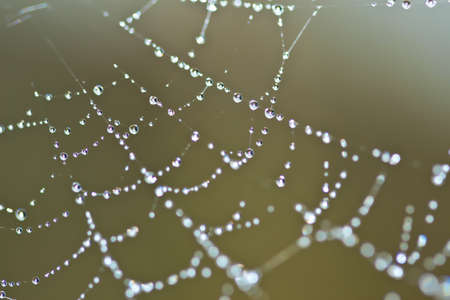 Spider Web Covered with Sparkling Dew Drops Stock Photo - 14570059