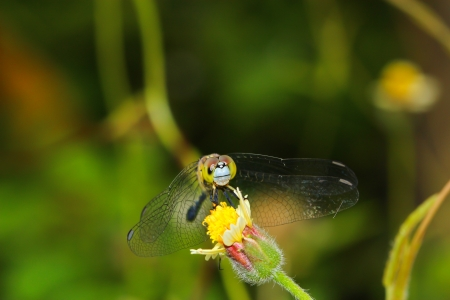 arthropod: dragonfly outdoor