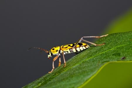 beetle on green leaf photo