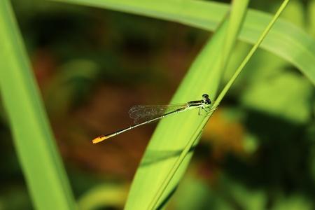 libélula al aire libre Foto de archivo - 14570142
