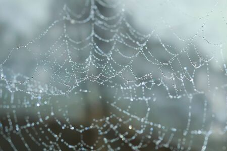 Spider Web Covered with Sparkling Dew Drops photo