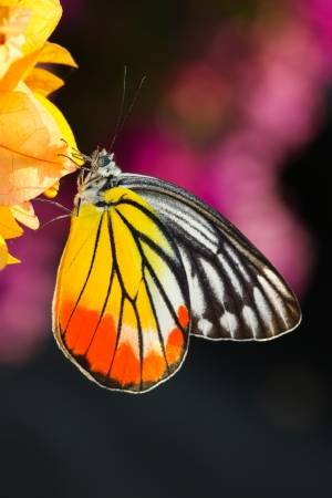 A butterfly resting on  flower