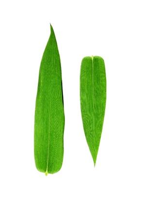 竹の葉に隔離されたホワイト バック グラウンド