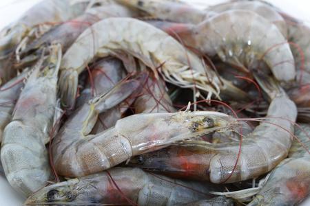 traditionary: Fresh shrimp