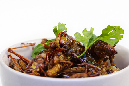Fried insects. photo
