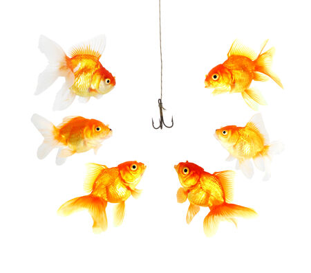 decoy: golds fish and metal empty hook on white background Stock Photo