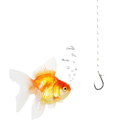 golds fish and metal empty hook on white background photo