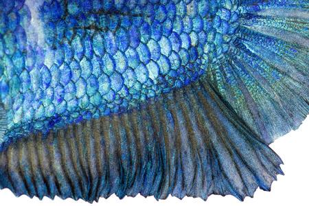 魚の皮のクローズ アップ