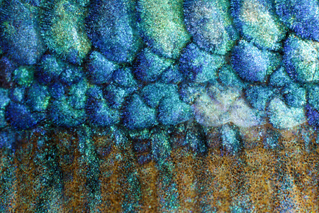 fish scales: Close-up on a fish skin Stock Photo